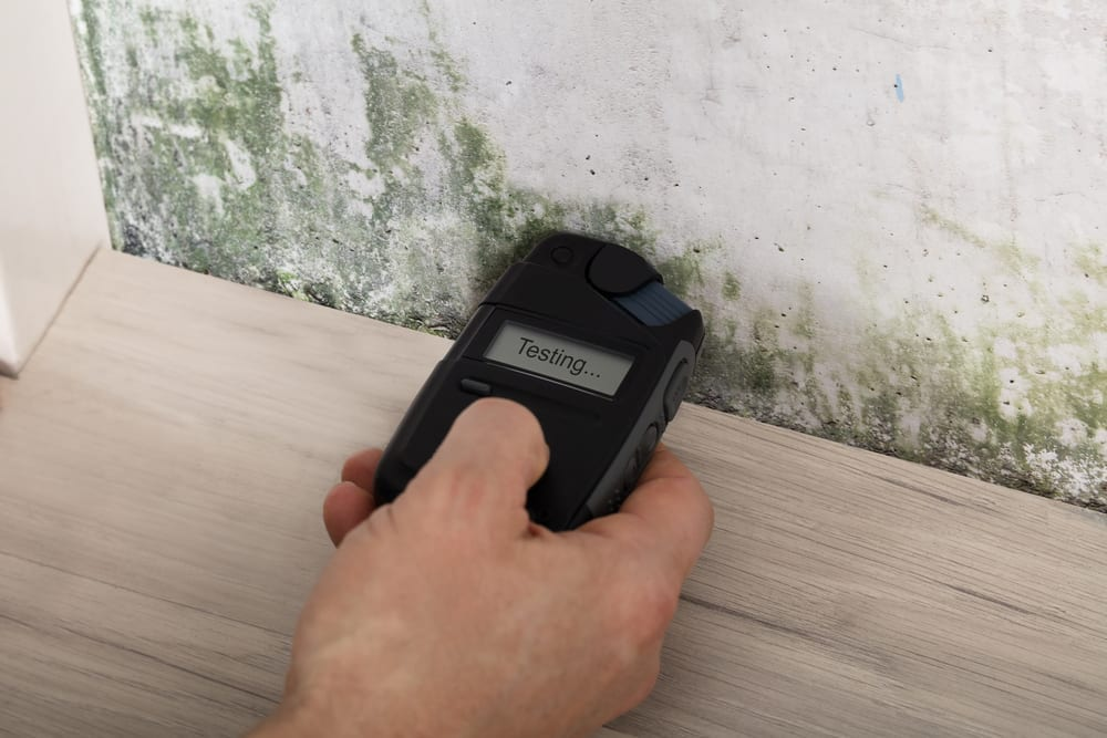 Why It's So Necessary To Detect And Destroy Mould