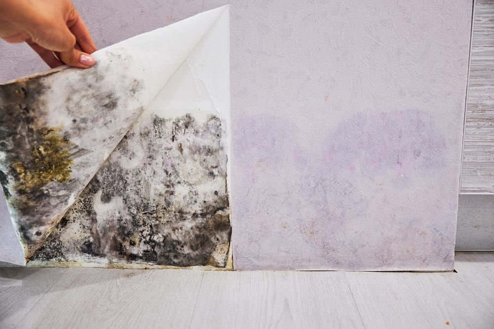 What Are The Dangers Of Toxic Mould?