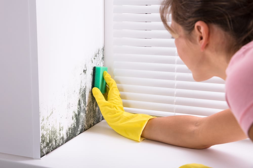 Finding Natural Ways To Attack The Mould Problem In Your Home