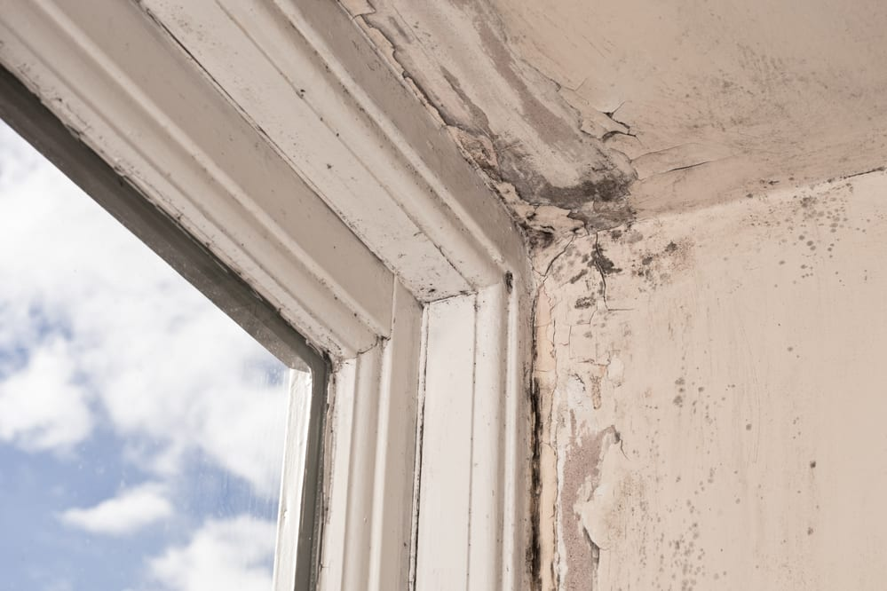 Preventing Mould Growth In Your Home All Winter Long